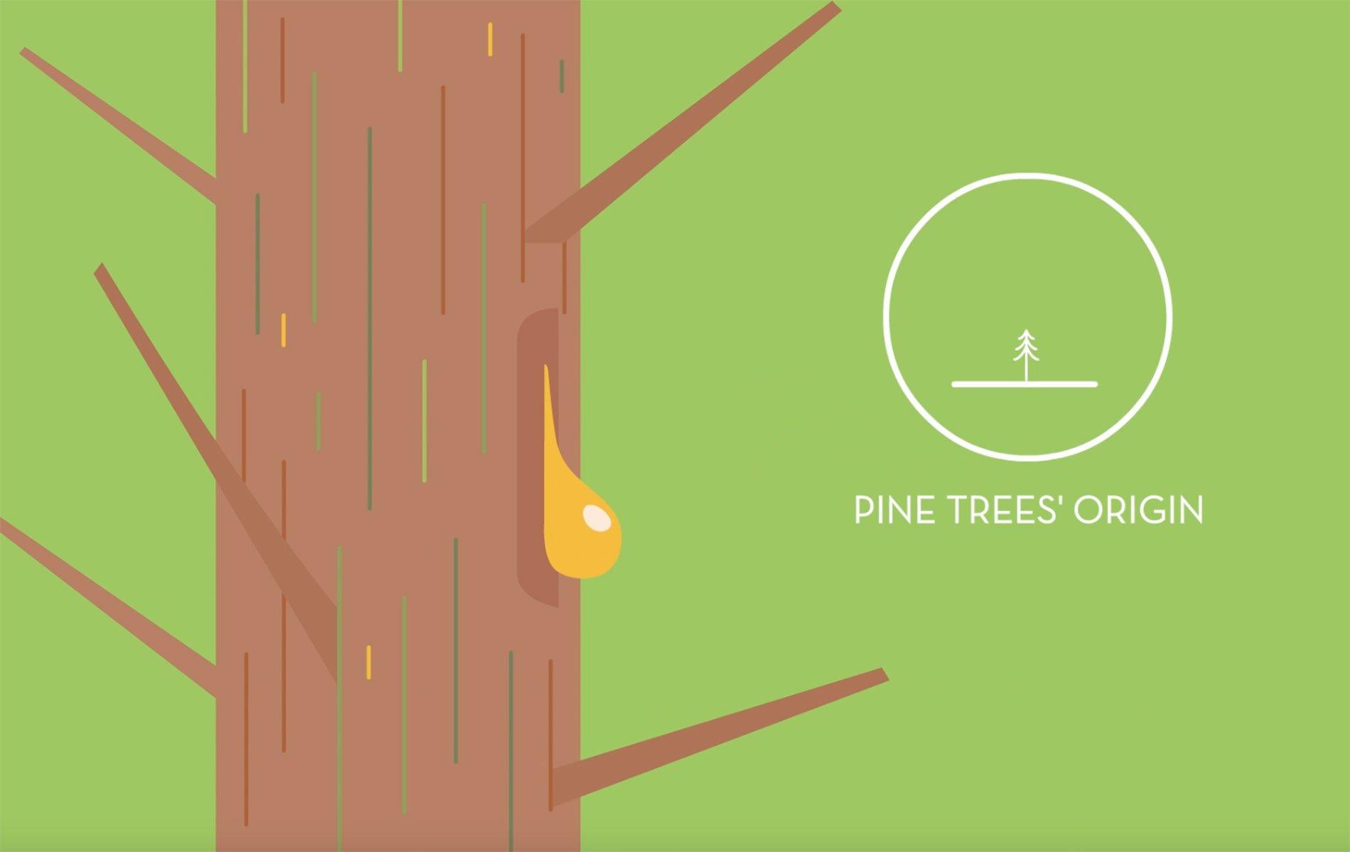 Kraton Pine Sustainability